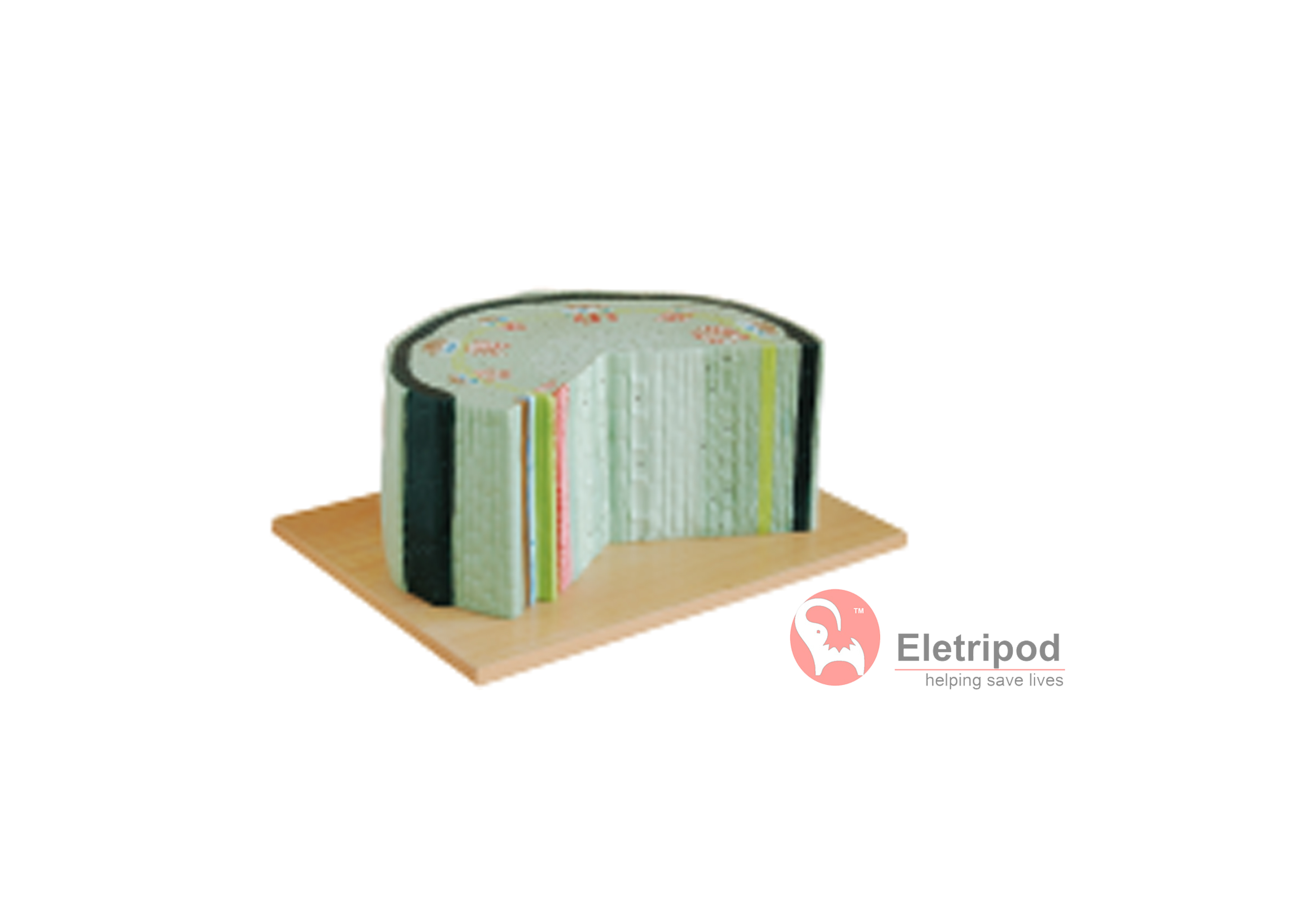 本模型取材于向日葵,示双子叶植物的组织构造。横切面:示角质层、表皮、木栓层、韧皮部、形成层和木质部以及髓的组织构造。径向切面:示角质层、表皮,表皮下排列着的木栓层,木栓层组织的里边为角部加厚的厚角组织。 包装:2件/箱,42x32x42cm,7kgs